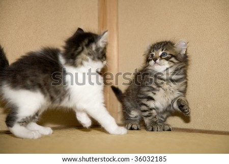 Two lovely kitties playing together - stock photo