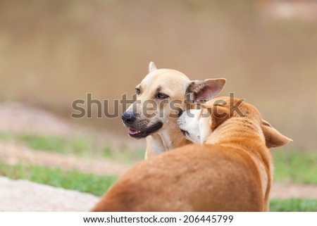 two lovely stray dog in Thailand - stock photo