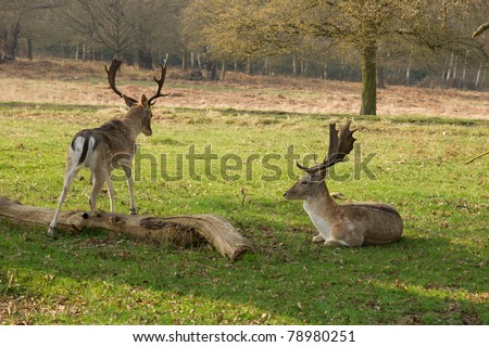 two lovely young deers having a rest on the meadow - stock photo
