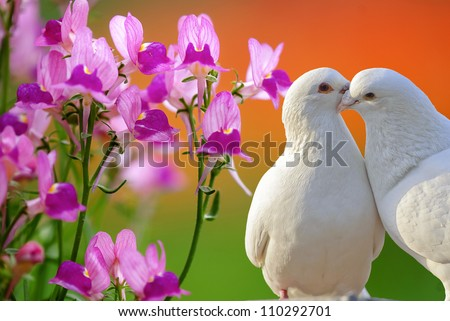 two loving white doves and butterfly orchid flower - stock photo
