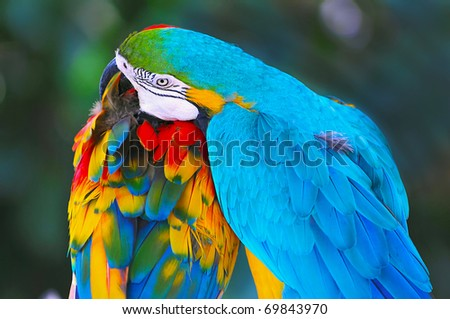Two Macaw Parrots - stock photo