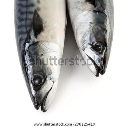 Two mackerel fishes isolated on white background - stock photo