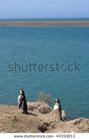 two magellan penguins in the Peninsula Valdes Natural Reserve(Argentina) - stock photo