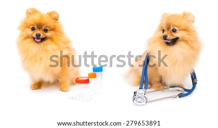 two medical dogs - stock photo