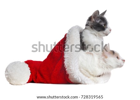 two mixed breed  cats in a santa hat looking to the side