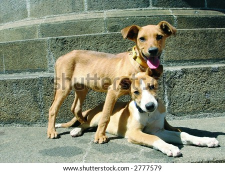 Two mixed breed dogs one down one up - stock photo