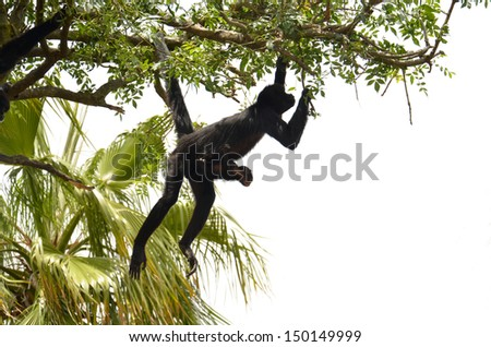 Two monkeys hanging on a tree.