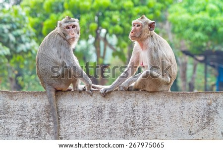 Two monkeys while holding their hands on the wall - stock photo