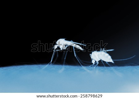 two mosquitos on a human skin in the evening, x-ray effect