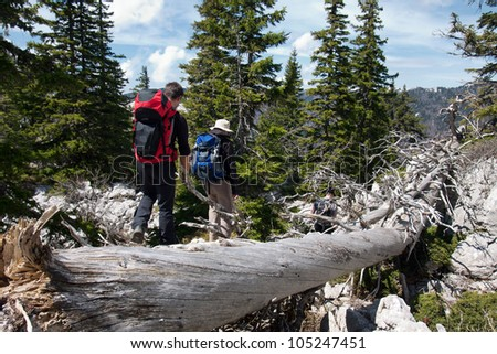 two mountaineers and the old tree trunk - stock photo