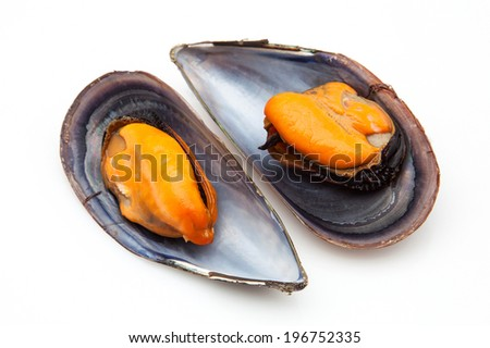 two mussels on a white background - stock photo