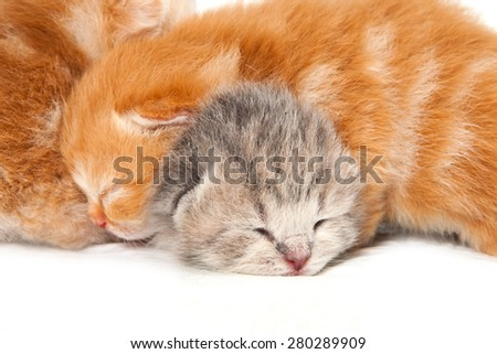 Two newborn kitten (isolated on white)