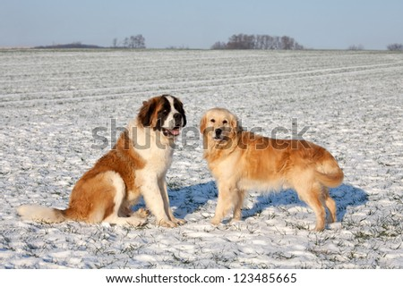 Two nice dog - stock photo