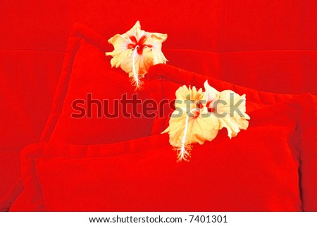 Two nice  flowers are on red cushions.