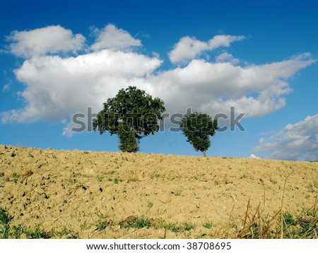 two oaks in a field - stock photo