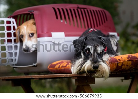 Two obedient dogs with plastic carrier on table