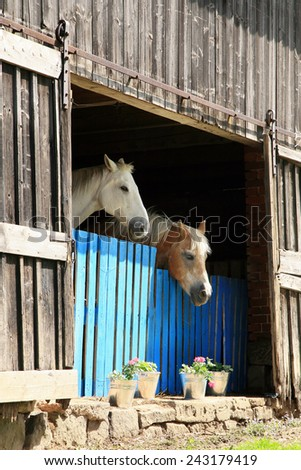Two old retired horses in a rural barn. - stock photo