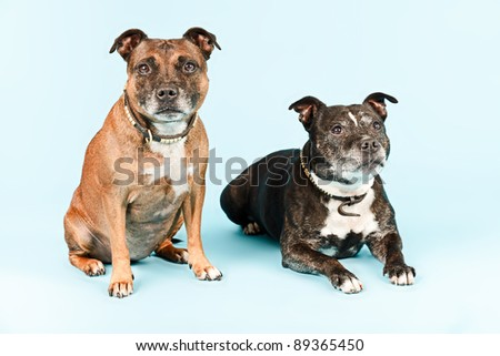 Two old staffordshires isolated on light blue background