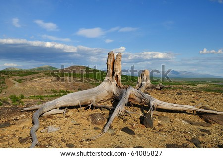 Two old stumps at top of a hill. - stock photo