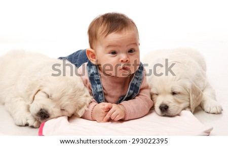 Two One month old puppie of golden retriever with little four sweet  month girl - stock photo