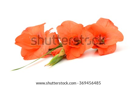 Two orange lilies are isolated against the white background - stock photo