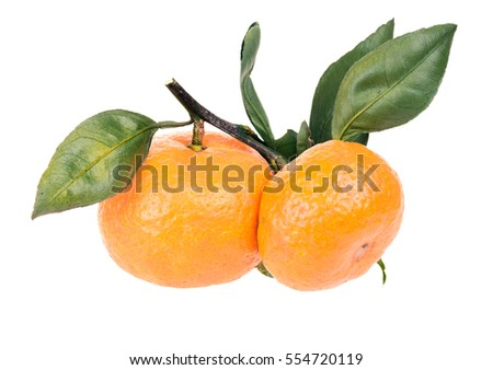 Two orange ripe Satsuma Mandarin  on a branch with leaves. Isolated on white background