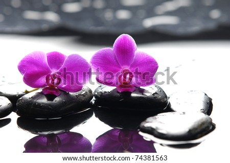 Two orchid and black stone with reflection - stock photo