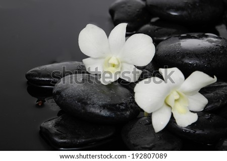 Two orchid on pebbles wet background