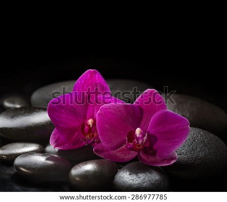 Two orchids lying on black stones. Spa concept.  LaStone Therapy - stock photo