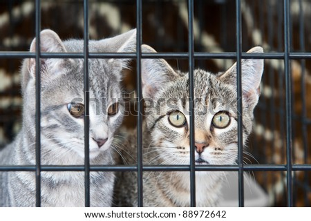 Two orphan tabby kittens waiting in a cage - stock photo