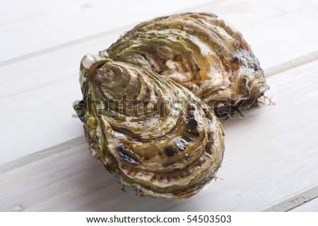 two oyster on white wood - stock photo