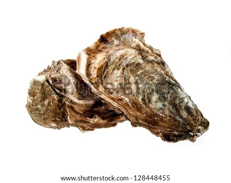 Two oysters - stock photo