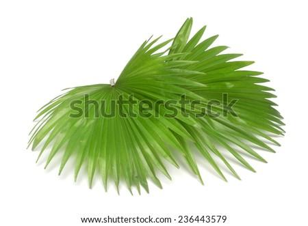 two palm foliage  - stock photo