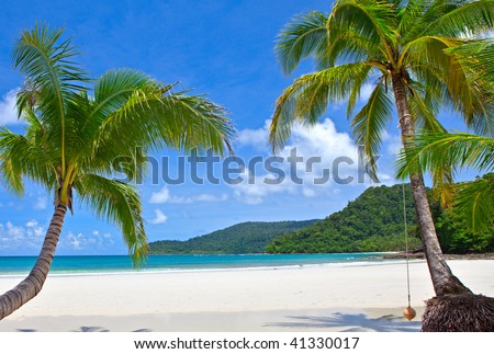 Two palm tree on the tropical beach