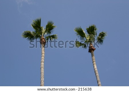 Two Palm trees