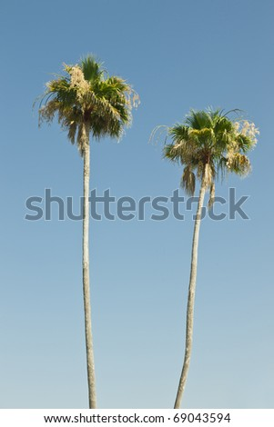 Two palm trees against a clear blue sky