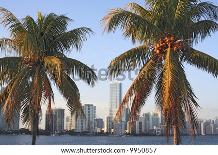 Two palm trees against the Miami skyline during late afternoon. - stock photo