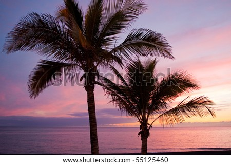 Two palm trees appear in a colorful sundown on the beach. - stock photo