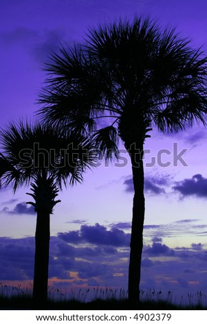 Two Palm trees at twilight on Pass-a-grille Beach. - stock photo