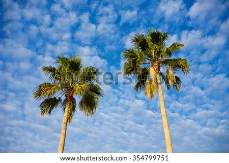 Two palm trees before blue sky with few clouds / Two palms with great green leaves standing alone infront of nice blue sky / Marvelous tropical palm trees - stock photo