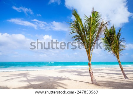 Two palm trees grow on empty sandy beach. Coast of Atlantic ocean, Dominican republic