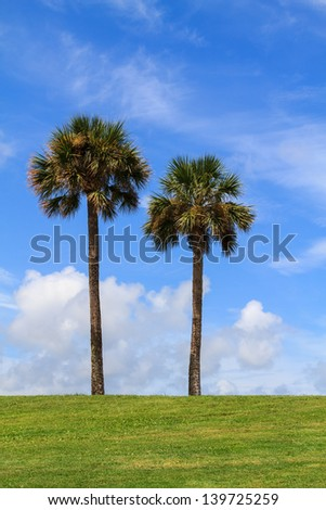 Two palm trees in St. Augustine, Florida, USA - stock photo