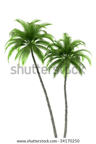 two palm trees isolated on white background with clipping path - stock photo