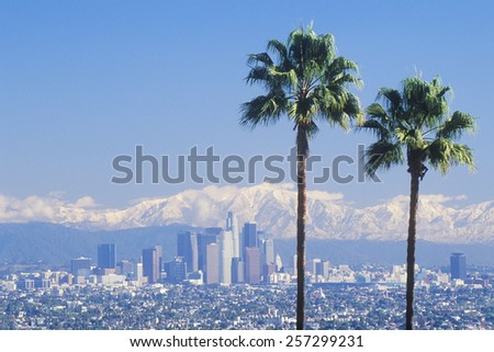 Two palm trees, Los Angeles and snowy Mount Baldy as seen from the Baldwin Hills, Los Angeles, California - stock photo