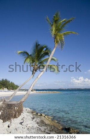 Two palm trees on a beautiful tropical shoreline of a small island. - stock photo