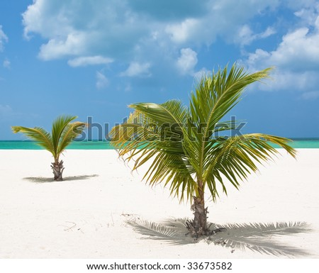 Two Palm trees on a Mexican tropical beach