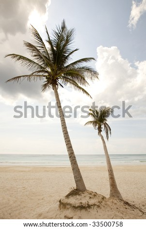 Two palm trees on the beach - stock photo