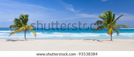 Two palm trees on the tropical beach, Bavaro, Punta Cana, Dominican Republic