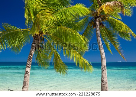 Two palm trees over blue lagoon in Fiji Islands - stock photo