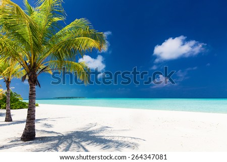 Two palm trees overlooking blue lagoon and white beach, Maldives - stock photo
